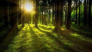 investmentbolag inom skog
